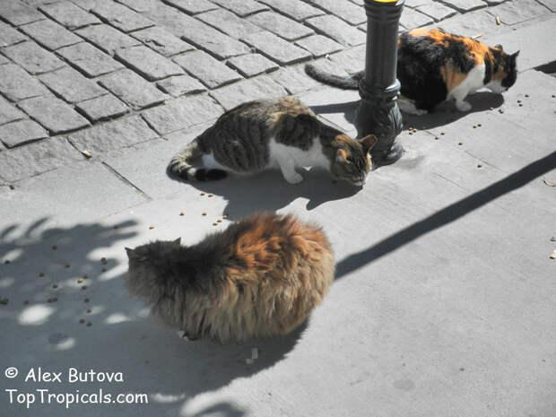 О любви к кошкам и не только