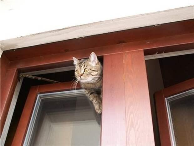 Спасибо всем тем, кто открывает окна в жару. Вы делаете нашу работу ещё горячее...
