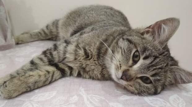 В чёрную пятницу девушка вместо покупок принесла домой бездомного котёнка, который оказался больным
