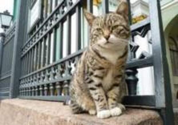 Спектакль о приключениях эрмитажных котов представят в Петербурге