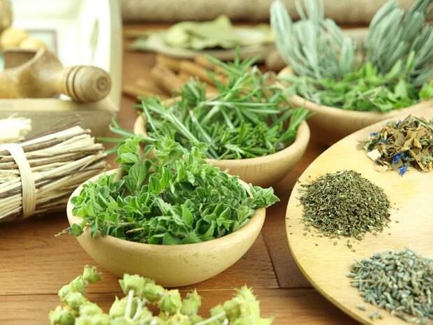 травы для желудка и печени
