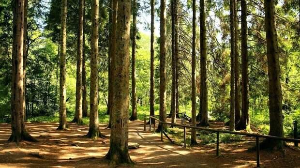 Ученые доказали, что воздух в хвойном лесу практически стерилен (не более 200−300 вредоносных бактерий на кубометр). Прогулка в хвойном лесу снимает стресс и нервное напряжение, тонизирует организм, активизируя газообмен в легких и улучшает дыхание. информация, картинки, факты