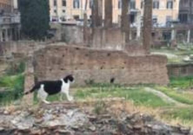 Римскую площадь отремонтируют за миллион евро