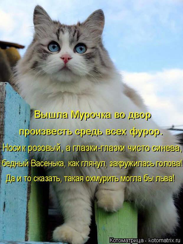 kotomatritsa_A (525x700, 296Kb)