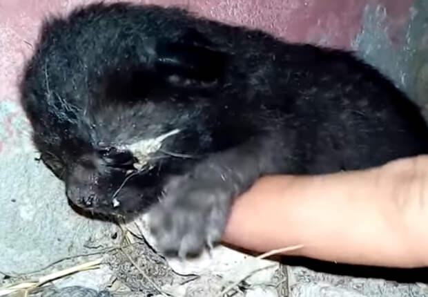История одного крохотного бездомного котёнка