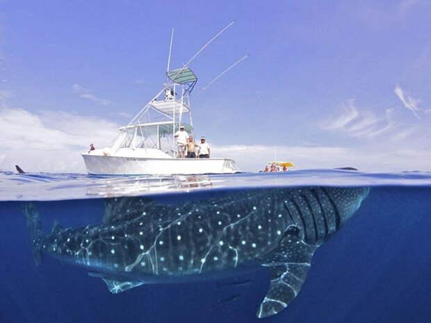 10 уникальных полуподводных снимков