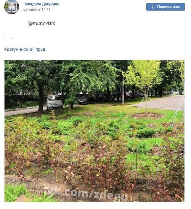 Фото дня: у Дегунинского пруда высадили новые кусты