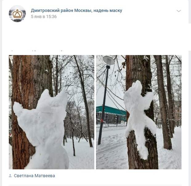 В Дмитровском заметили «снежного котика»