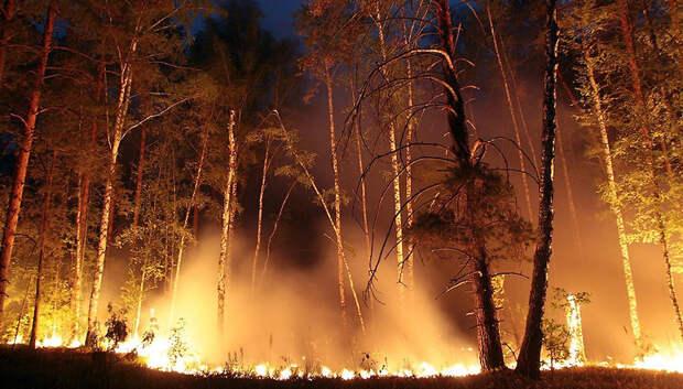 За первые майские праздники в Подмосковье ликвидировали 22 лесных пожара