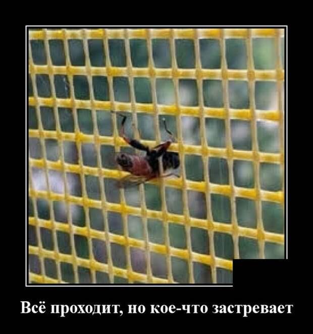 Демотиватор про насекомых