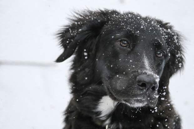«Концлагерь» для собак обнаружили в читинской колонии