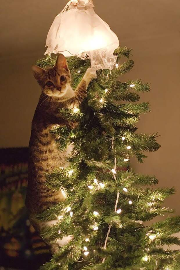5. Котику хорошо и весело животные, новый год, праздник к нам приходит, разрушительная сила, рождество, собаки и кошки, юмор