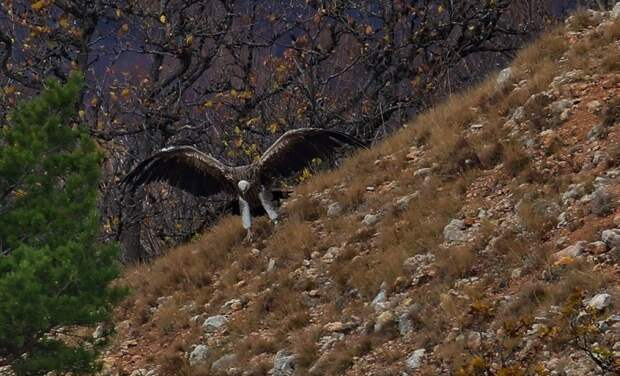 Уникальную птицу привезли в Крым