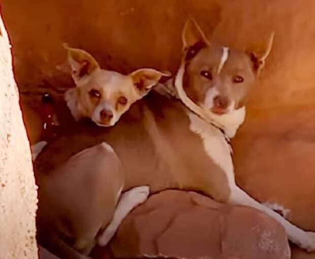 Испуганные собаки