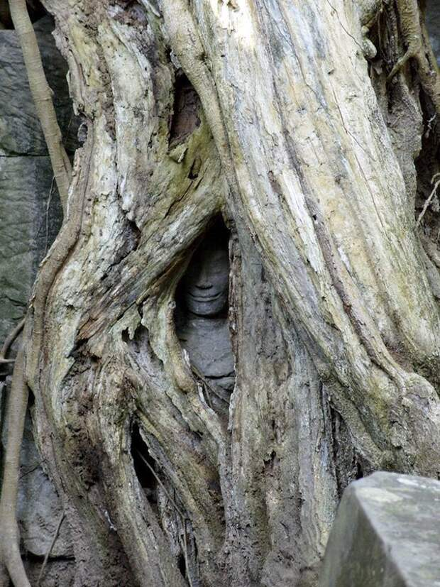 28. Статуя, поглощенная деревом животные, мир, подборка, природа, ужас, фото, явление