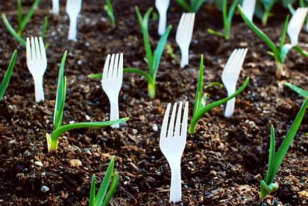 Маркеры растений.