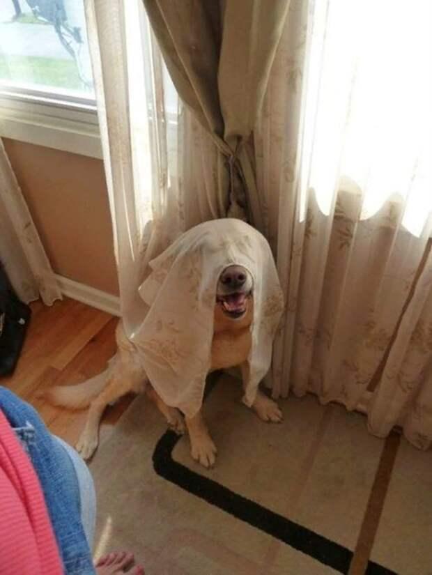 Собаки которые пытались спрятаться!