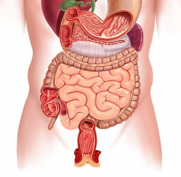 Рацион для исцеления кишечника