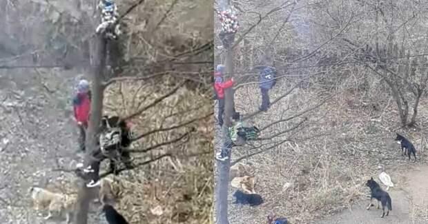 Башкирские школьники спасались отбродячих собак, сидя надереве