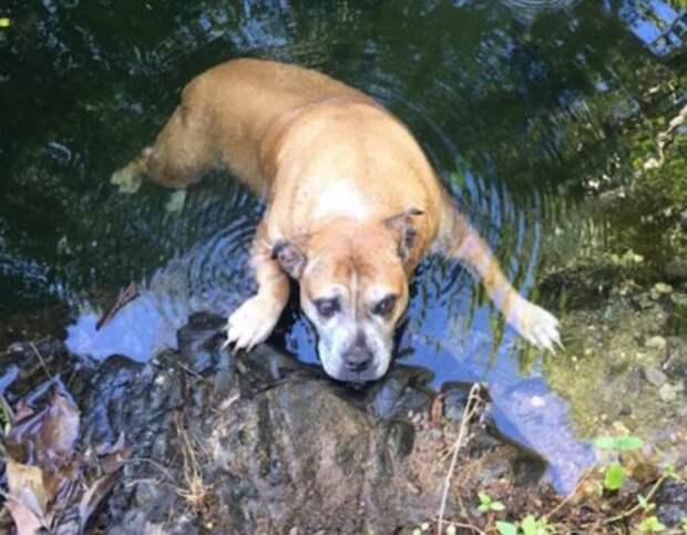 Чтобы нести неходячего пса, найденного в ручье, туристы придумали… вот что!