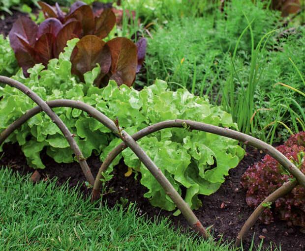 Сдержанная граница: дуги из лозы красиво отделяют грядку от прилегающего газона