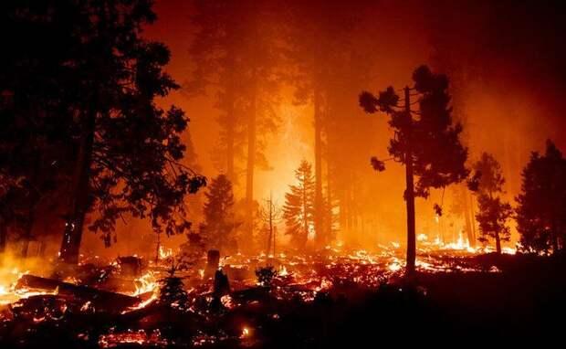 Пожары в США: эвакуировано полмиллиона людей