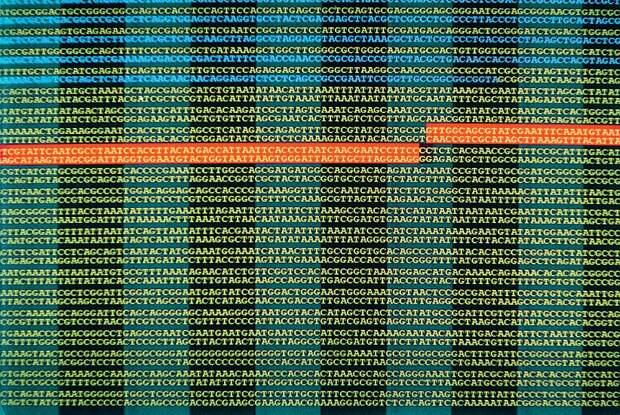 Фрагмент расшифровки генома человека