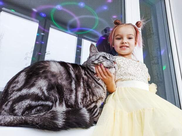 Исполнили мечту свекрови и подарили ей котика из рекламы. Показываю, каким вырос подарок по имени Завхоз спустя 5 лет