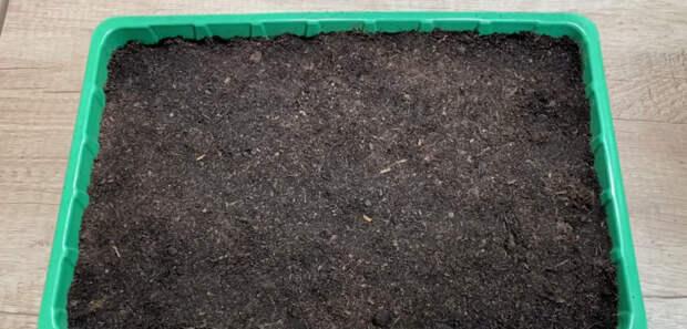 Метод посадки томатов на рассаду, который дает потрясающий результат