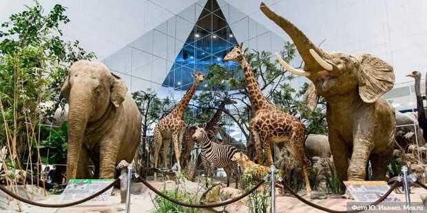 Собянин значительно расширил круг участников проекта «Музеи – детям». Фото: Ю. Иванко mos.ru