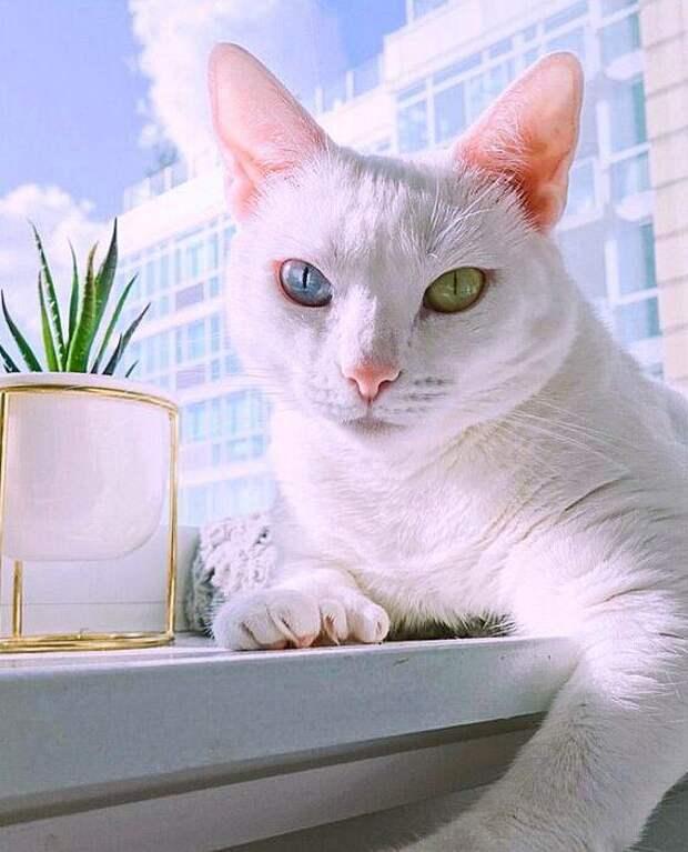 От необычной кошки Сансы отказались хозяева, а она взяла и стала популярной