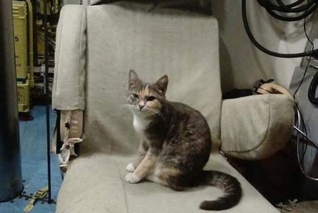 Кошка Муся с Новороссийской военной базы родила котят на субмарине на глубине 200 метров котята, кошка, окотилась