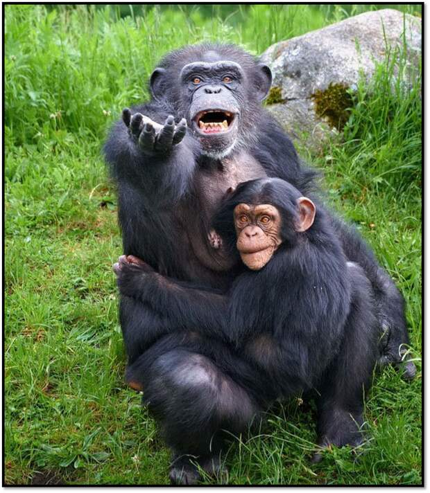 Смешная подборка с животными