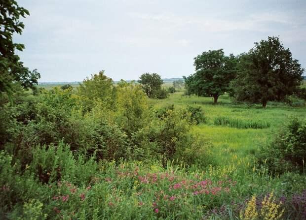 Степной пейзаж — почти парк!