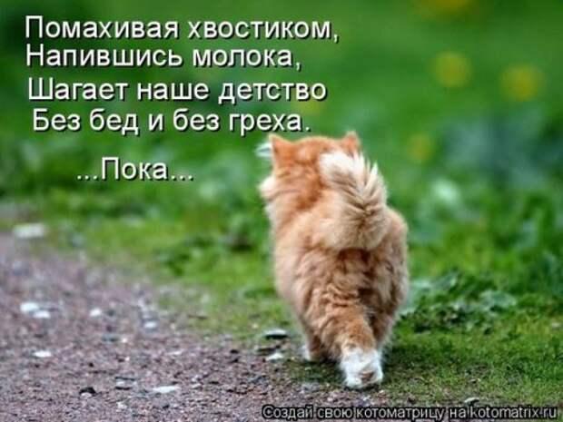 Свежая котоматрица для всех (36 фото)