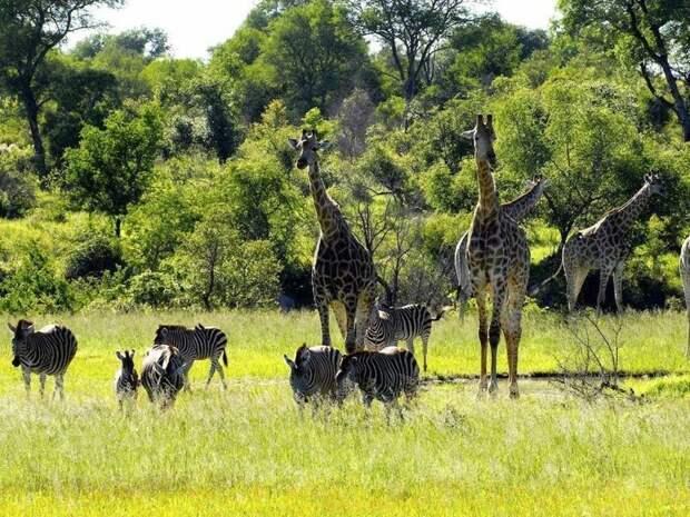 10. Национальный парк Крюгер (ЮАР) заповедник, заповедники, национальные парки, национальный парк, парки, познавательно, страны мира, туристу на заметку