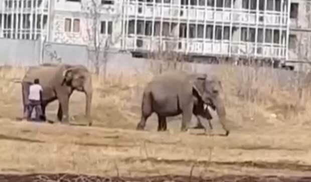 В Челнах на улице заметили слонов