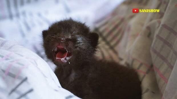 Его громкий голос и удача спасли ему жизнь (стопкадр из видео) гиф., животные, кот, котенок, котик, котики, милота, фото