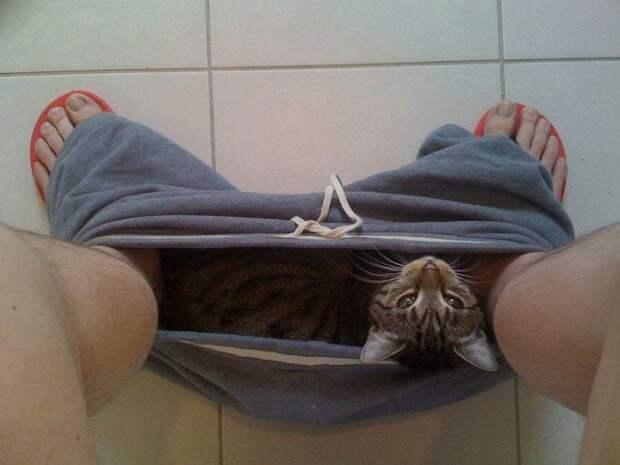 Инструкция для хозяев котов. Выполнять неукоснительно