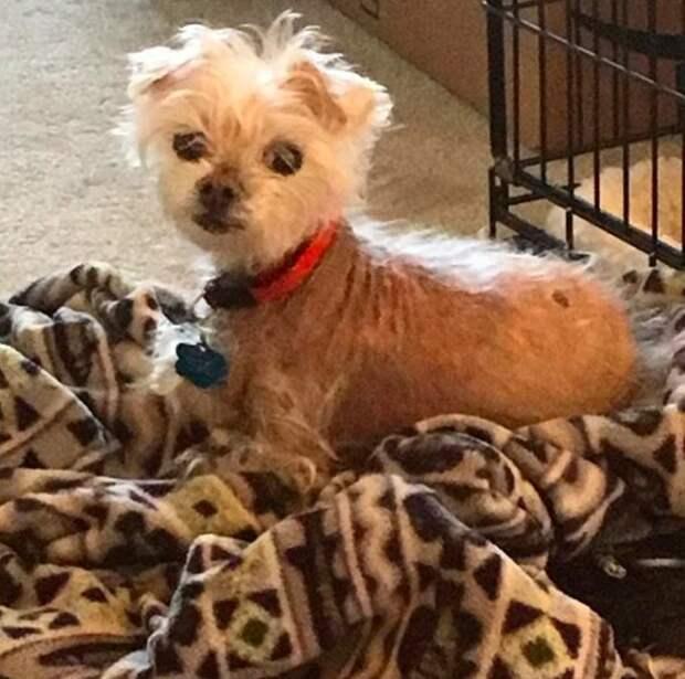 Старый лысый пес, бродил по улицам, получил шанс на лечение