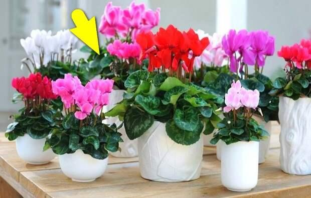 Хитрость, с которой растения буквально цветут и пахнут.