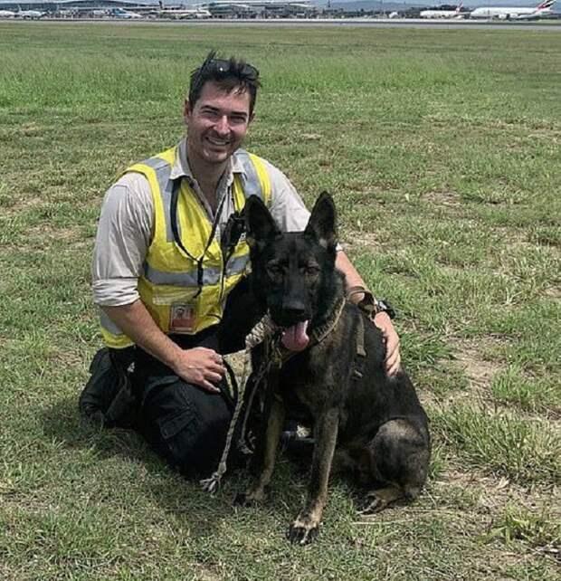 Пса «уволили» из полиции за поведение, а теперь он стал грозой птиц