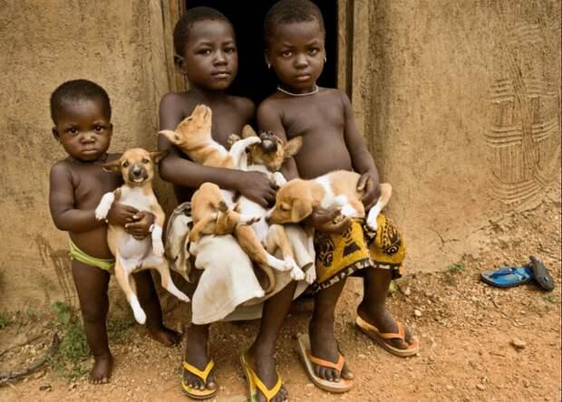 Басенджи - древняя африканская порода. Фото