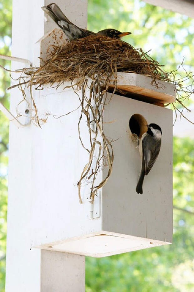 30 гнезд в страннейших местах