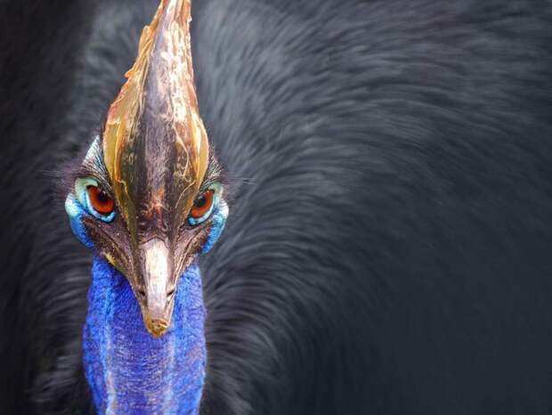 8 прекрасных фото редких синих животных