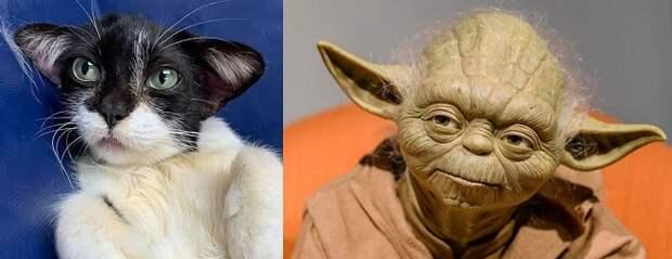 «Кошка Йода»: мурлыка, поразившая пользователей Интернета своей мордочкой и ушами, ищет дом