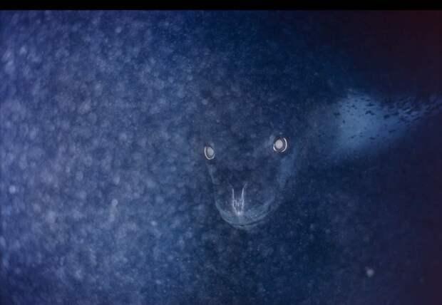 23. Морской леопард животные, мир, подборка, природа, ужас, фото, явление