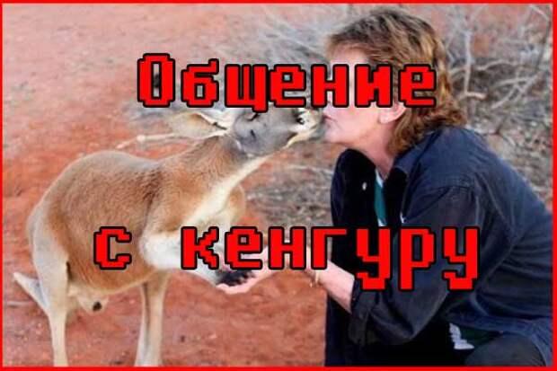 Кенгуру умеют общаться с людьми