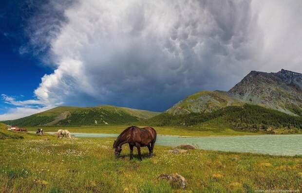Altai11