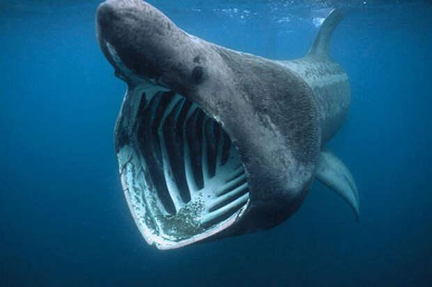 На спутниковых фотографиях разглядели гигантскую акулу
